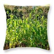 Lake Country Corn Throw Pillow