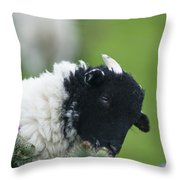 Lamb Throw Pillow