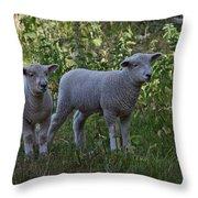 Lambs Throw Pillow