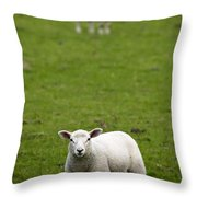Lambs In A Field Throw Pillow