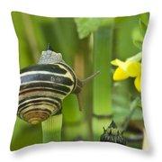 Land Snail 5698 Throw Pillow