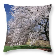 landscape 3 Sprawling Apple Tree in Spring Throw Pillow