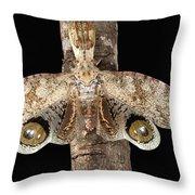Lantern Bug Fulgora Laternaria Throw Pillow