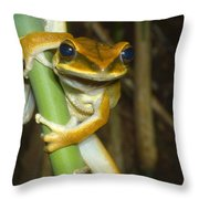 Large Arboreal Hylid Frog Throw Pillow