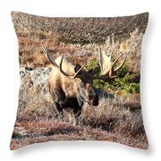Large Bull Moose Throw Pillow