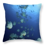 Large School Of Batfish, Christmas Throw Pillow
