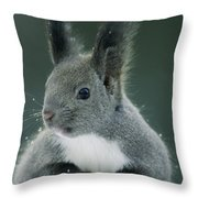 Large Tufted Ears Grace An Throw Pillow