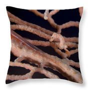 Large Whip Goby And Pygmy Seahorse Throw Pillow