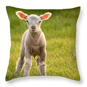 Larry Lamb And His Lovely Pink Ears. Throw Pillow