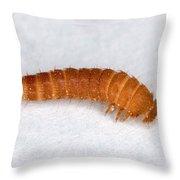 Larva Of Black Carpet Beetle Throw Pillow