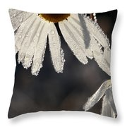 Late Blooming Marguerite Flowers Throw Pillow