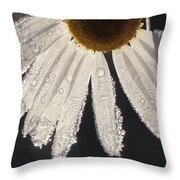 Late Blooming Marguerite Throw Pillow