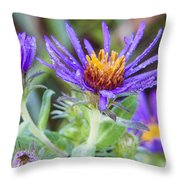 late Summer Fleabane Throw Pillow