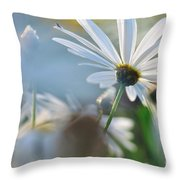 Late Sunshine On Daisies Throw Pillow