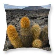 Lava Cactus Brachycereus Nesioticus Throw Pillow