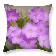 Lavender Phlox Throw Pillow