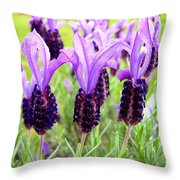 Lavenders Throw Pillow