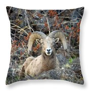Laying In The Brush Throw Pillow