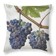 Le Moyne: Grape Vine, C1585 Throw Pillow