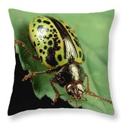 Leaf Beetle Calligrapha Sp Portrait Throw Pillow