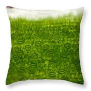 Leaf Stomata, Lm Throw Pillow