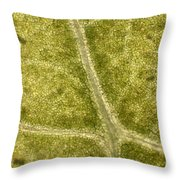 Leaf Vascularization Throw Pillow