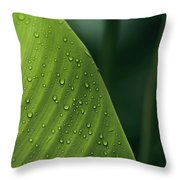 Leaf With Water Drops, Barro Colorado Throw Pillow