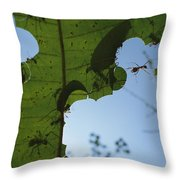 Leafcutter Ant Atta Columbica Workers Throw Pillow