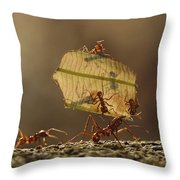 Leafcutter Ant Atta Sp Group Carrying Throw Pillow