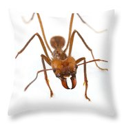 Leafcutter Ant Worker Costa Rica Throw Pillow