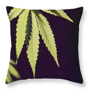 Leaves Of A Marijuana Plant Cannabis Throw Pillow