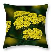 Lemon Lace Throw Pillow