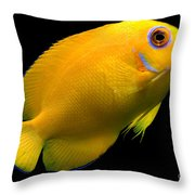 Lemonpeel Angelfish Throw Pillow