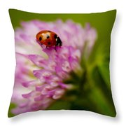 Lensbaby Ladybug On Pink Clover Throw Pillow
