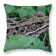 Leopard Frog Throw Pillow