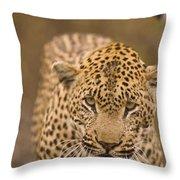 Leopard Panthera Pardus, Arathusa Throw Pillow