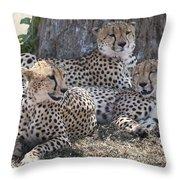 Leopards, Kenya, Africa Throw Pillow