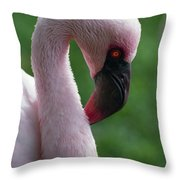 Lesser Flamingo Throw Pillow