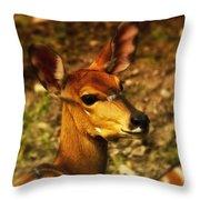 Lesser Kudu Throw Pillow