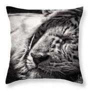 Let Sleeping Tiger Lie Throw Pillow