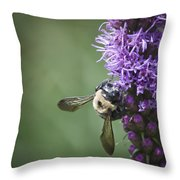 Liatris And Bee Squared 2 Throw Pillow