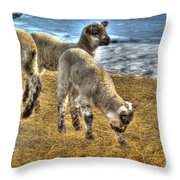 Liddle Lamzy Divey Throw Pillow