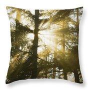 Light Beams Shining Through Trees And Fog Throw Pillow