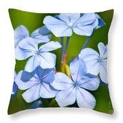 Light Blue Plumbago Flowers Throw Pillow by Carol Groenen