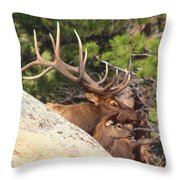 Like Father - Like Son Throw Pillow by Shane Bechler
