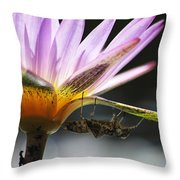 Lilly Visitor Throw Pillow by Lauri Novak