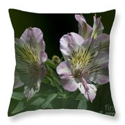 Lily - Liliaceae 3 Throw Pillow