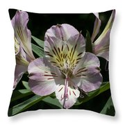 Lily - Liliaceae Throw Pillow
