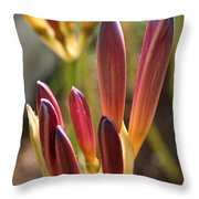 Lily Candles Throw Pillow