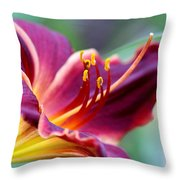 Lily - Hardy Throw Pillow